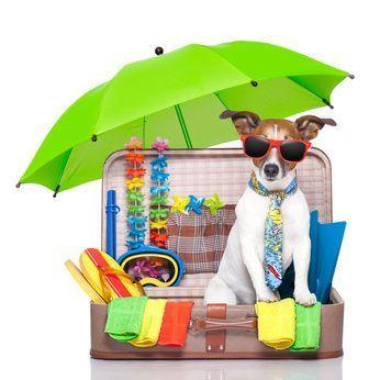 Urlaub mit Hund Checkliste