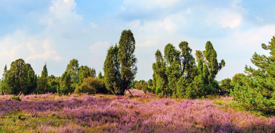Lueneburger Heide bei Wilsede