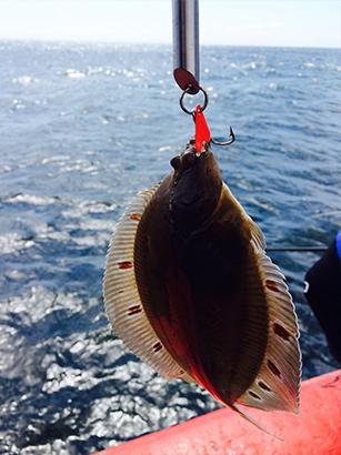 hochseeangelnoanoder-ostsee-plattfisch
