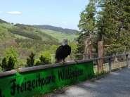 Landhaus - Zur Heide in Willingen (Upland) Urlaubsumgebung vor Ort