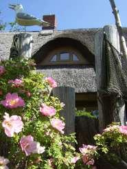 Lütt Hus in Born am Darß Aussenansicht